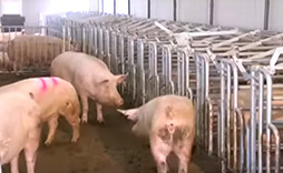 Swine Penning Systems photo